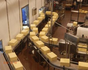 CONVEYOR BELTS FOR CHEESE PROCESSING