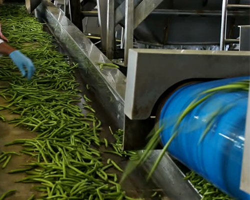 CONVEYOR BELTS FOR VEGETABLES