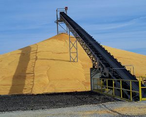GRAIN CONVEYOR BELT